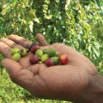 Méltányosságot a helyi termelőknek 4. rész