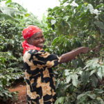 Tchibo, 100% fenntartható kávéból