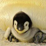 A sebezhető Antarktisz