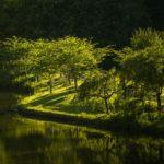 Fenntartható favágás-fenntartható erdőgazdálkodás