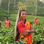 Körkörös gazdaság-új lehetőség India számára