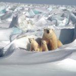 Növényi DNS-ek gyűjteménye: Magbank az Északi-sarkkörön