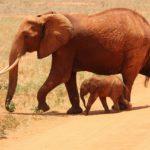 Tilos a nejlonzacskó Kenyában