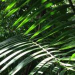 Az erdőirtás veszélyezteti a globális gazdaságot