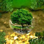 Új partnerség a felelős erdőgazdálkodásért