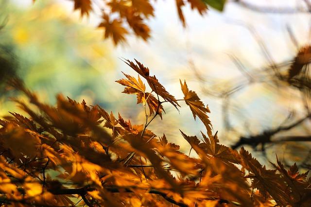 Helló ősz! - CSR esmények, képzések..